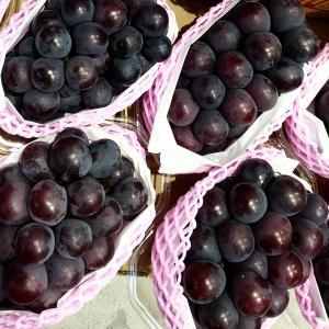 秋の美しい葡萄♬