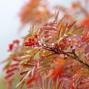 【秋分の日】日本の国民の祝日