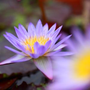 桜姫との会話、病気、ガン(地上に降り立った天使の教え。3次元の教育で学べない教え)16