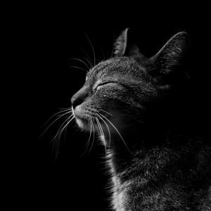 保護猫さん、大量に嘔吐を繰り返す…