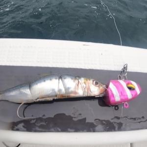 珍しくタチウオ釣り。よく釣れるんだけど・・・