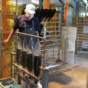 日向あくがれ黒麹仕込みの詰口作業 2021/09/09