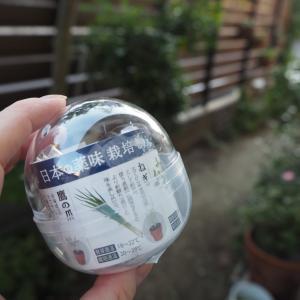 日本の薬味を育てましょう