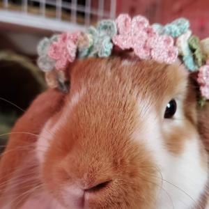 うさぎの♡花かんむりを編みました