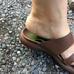 足裏に「葉っぱを貼る療法」やってみました【さとうみつろうさんのブログより】
