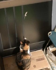 ニャンコのお客様 猫じゃらし