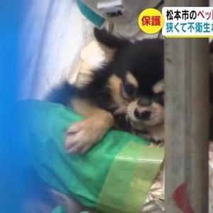 600頭の犬を2施設で劣悪な環境で飼育か ペット業者を家宅捜索