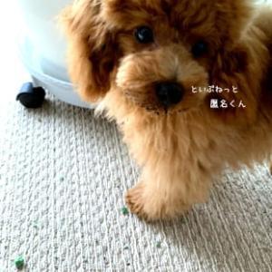 【誤飲体験談】子犬が植物の固形肥料を食べた時の対処法