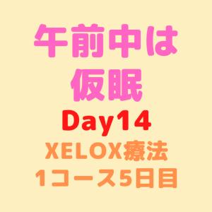 【Day14】午前中は仮眠
