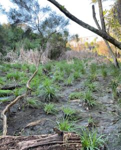 お気に入りの散歩道 – Kauri Glen Reserve へ