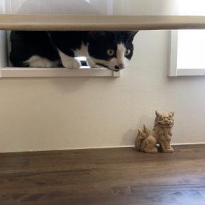 夕方ニャルソックと猫端会議