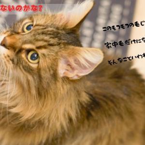 猫の毛がつきにくい素材を選んで快適な暮らし!アイテム別おすすめ素材をご紹介