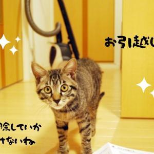 ハウスクリーニングは猫のニオイにも対応できる?室内飼いの悩みを解決!