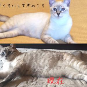 うちの猫の毛づくろいしすぎ!もしかしてストレス?理由と対処法を教えます。