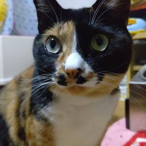 猫さんの写真久しぶりに綺麗に撮れた🤗✨
