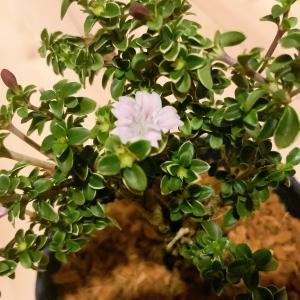 増える植物