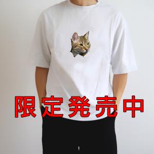 猫(チロさん)のオモシロTシャツ、限定発売中・・・・
