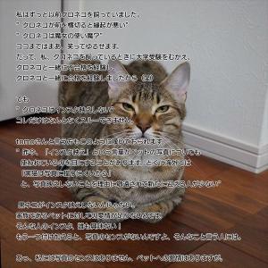 209:お迎えする猫をいろんな基準で選ぶことでしょう。でも、インスタ映えする、しない、で選ぶのは何となく引っかかります。