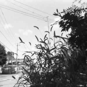 フィルム写真棚 136