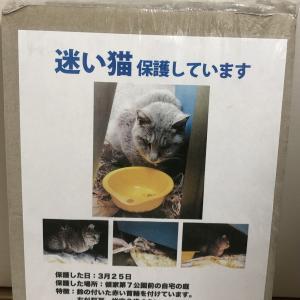 迷い猫の「飼い主さん」を探しています