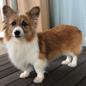 ライヤは 私の『最高で 自慢の愛犬』でした