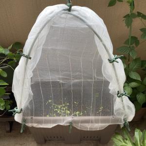 100均材料で出来る、収穫窓付き防虫カバー