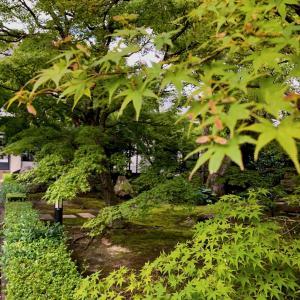 秋の特別拝観〜相国寺
