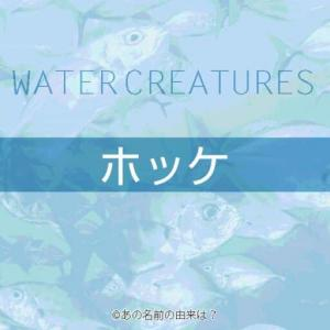 ホッケの名前の由来は?居酒屋でも人気の焼き魚の語源とは?北海道の美味しい魚