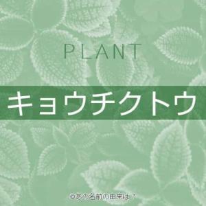 キョウチクトウの名前の由来は?花言葉にもある危険な木の語源!なぜ植えられる?