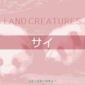 サイの名前の由来は?ツノと鎧に覆われたクールな動物の語源!動物園で見られる動物