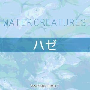 ハゼの名前の由来は?愛嬌ある顔で人気の天ぷらが美味しい魚!釣って食す江戸前ハゼ