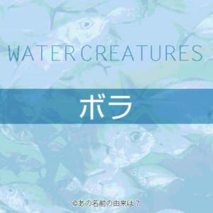 ボラの名前の由来は?地方でも名前が異なる出世魚の語源とは?珍味のからすみ