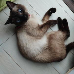 猫が赤ちゃんを引っ掻くとき