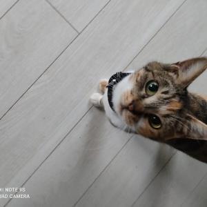 保護猫るなちゃん☆家に来て2ヶ月半がたちました