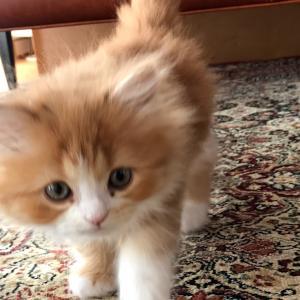 細い所をどや顔で進む子猫がこちらですwww
