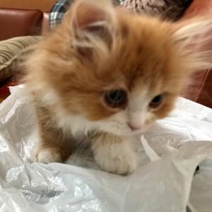 子猫を捕まえるwww捕まえた子猫がこちら