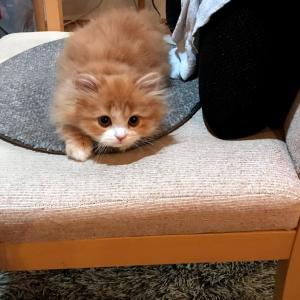 DIYでたまえ城(小屋)をつくる~新しいお家でくつろぐ子猫~