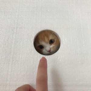 ハコの中からはい! ひょっこりする子猫