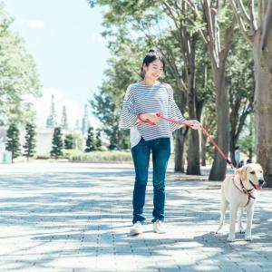 犬のリード 種類と選び方