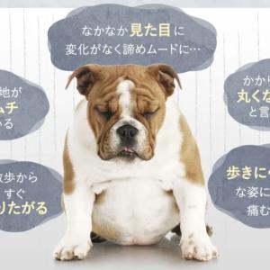 愛犬がダイエットしてもなかなか痩せない理由は【筋肉量が原因?】