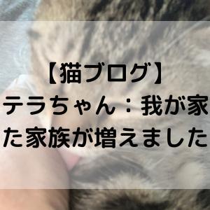 【猫ブログ】ステラちゃん:我が家にまた家族が増えました!