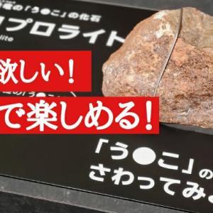 徳島県立博物館に行ってきた!子供も大人も楽しめる