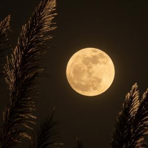 お月見えない団子