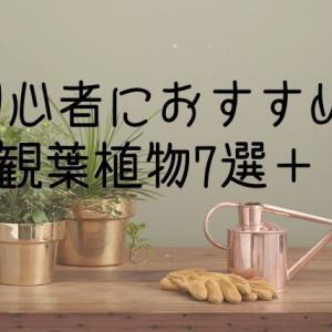 【元花屋がオススメ】初心者におすすめの観葉植物7選+1