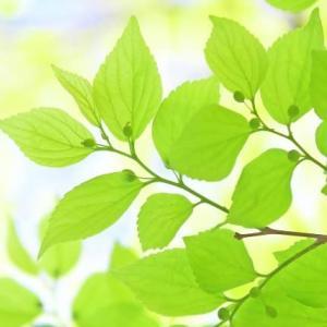 植物の葉が、強烈な直射日光を受けても平気な理由