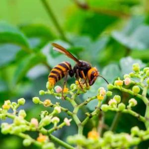 ウエストのくびれたハチは怖い!