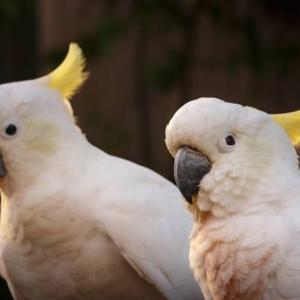 鳥の顔が無表情の理由