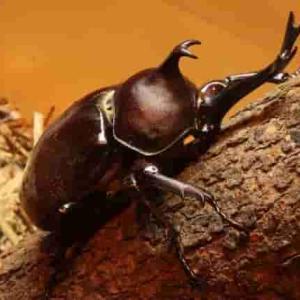 小さな昆虫が巨大化しない理由