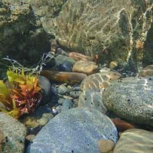 海の底に巣を作るウミトゲアリとは?