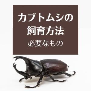 カブトムシの飼育方法&必要なもの【まとめ】